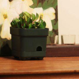 OmniEye Hi-Def 1080p Plant Spy Camera
