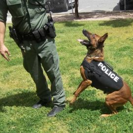 K9 Shadow Vest: Bulletproof Dog Vest